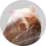 Komar Dots Bearava   D1-015_