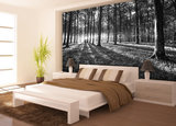 Trees & Leaves Photo Wallpaper Mural 2229P8_