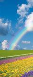 Flowers Rainbow Sky Abstract Door Mural Photo Wallpaper 018VET_