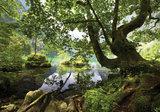 Tree Nature Photo Wall Mural 10222P8_