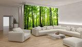 Trees & Leaves Photo Wallpaper Mural 186P8_