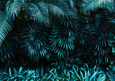 Botanisch Fotobehang 12666P8