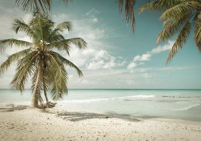 Beach Palmtrees Photo Wall Mural 13347P8