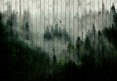 Forest Fog Photo Wall Mural 13552P8