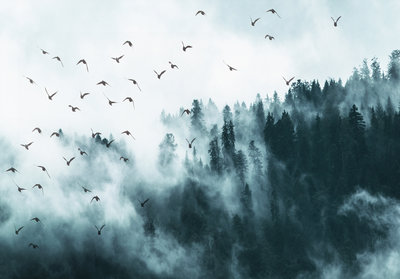 Birds in the fog Photo Wall Mural 12394P8