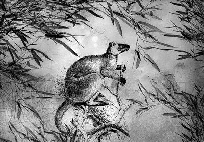 Kangaroo Photo Wall Mural 13696P8