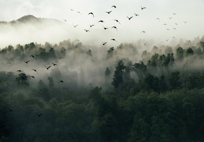 Foggy Forest Photo Wall Mural 12517P8