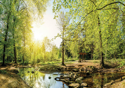 Forest Photo Wall Mural 10508P8