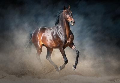 Horse Photo Wall Mural 13600P8