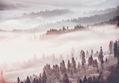 Foggy Forest Photo Wall Mural 13573P8