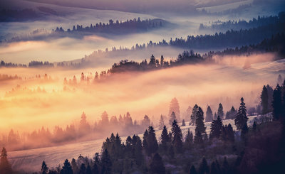 Foggy Forest Photo Wall Mural 13572P8