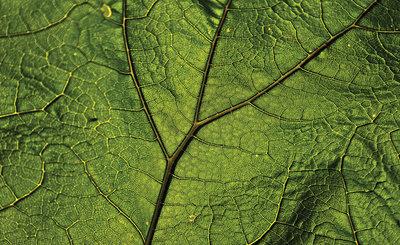 Leaf Photo Wall Mural 13569P8