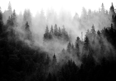 Foggy Forest Photo Wall Mural 13564P8