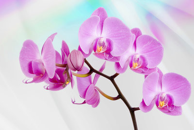 Flowers & Plants Photo Wallpaper Mural 116P8