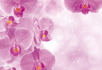 Flowers & Plants Photo Wallpaper Mural 149P8