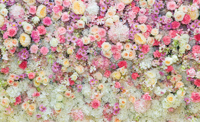 Flowers & Plants Photo Wall Mural 3102P8