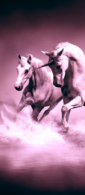 Horses girls Bedrooms Door Mural Photo Wallpaper 429VET