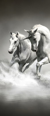 Horses girls Bedrooms Door Mural Photo Wallpaper 428VET