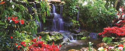 Waterfall in Colourful Jungle Panoramic Photo Wall Mural 166VEP