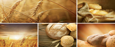Fresh Bread and Rolls  Panoramic Photo Wall Mural 103VEP