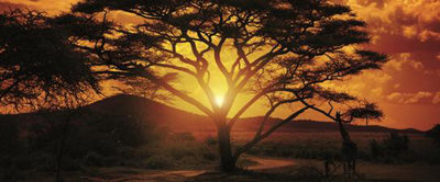 Africa Panoramic Photo Wall Mural 055VEP