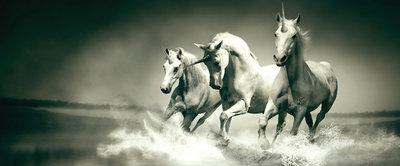 Unicorns Galloping on Water Panoramic Photo Wall Mural 430VEP