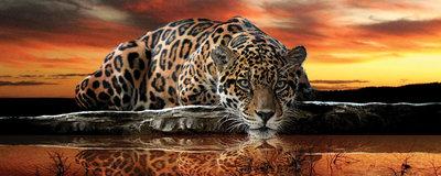 Jaguar Against the Setting Sun Panoramic Photo Wall Mural 126VEP