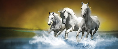 White Horses Galloping on Water Panoramic Photo Wall Mural 425VEP
