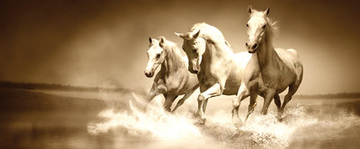White Horses Galloping on Water Panoramic Photo Wall Mural 427VEP