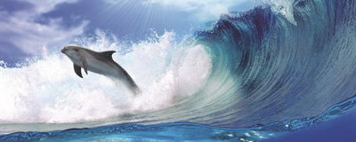 Dolphins Jumping on Waves Panoramic Photo Wall Mural 188VEP