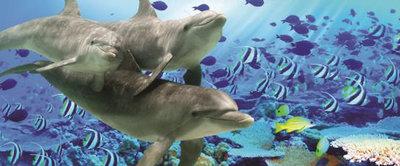 Dolphin Panoramic Photo Wall Mural 072VEP