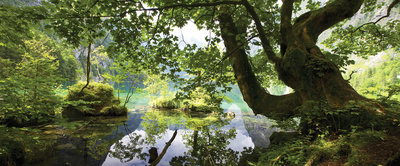 Pond Hidden in the Forest Panoramic Photo Wall Mural 3457VEP