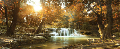 Waterfall in the Autumn Forest Panoramic Photo Wall Mural 10470VEP