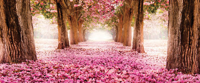 Flower Alley Panoramic Photo Wall Mural 20015VEP