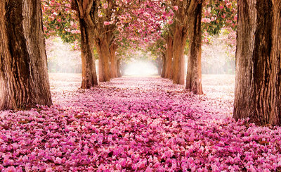 Trees & Leaves Photo Wall Mural 851P8