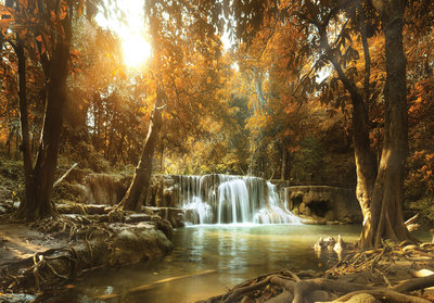 Forest Waterfall Photo Wall Mural 10470P8