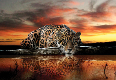 Animals Photo Wallpaper Mural 126P8