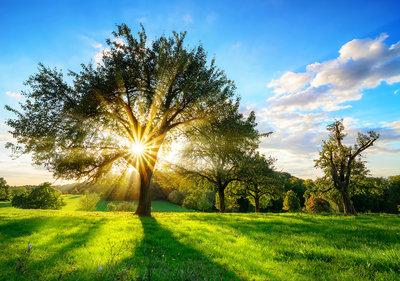 Landschap met zon Fotobehang 13015P8