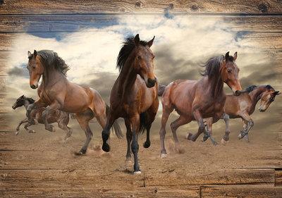 Paarden Fotobehang 10083P8