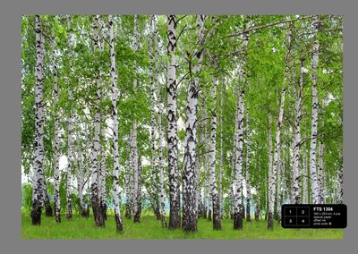 Dutch Wallcoverings AG Design Berry-Birch (4 Delen) FTS1304