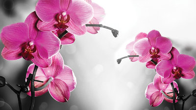 Flowers & Plants Photo Wallpaper Mural 1034P8
