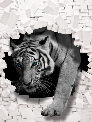 3D Tiger Coming out the Wall Photo Wall Mural 10400VEA