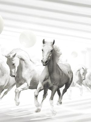 Abstract horses Photo Wall Mural 10154VEA