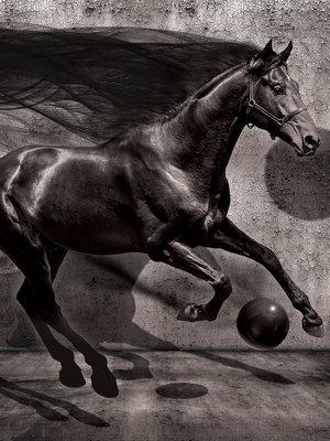Black Horse Photo Wall Mural 20303VEA