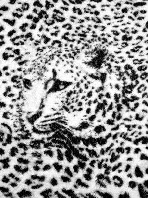 Black and White Cheetah Photo Wall Mural 20306VEA