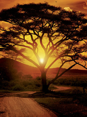 Africa Photo Wall Mural 20316VEA