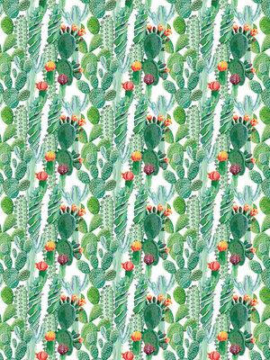 Cactus Photo Wall Mural 11082VEA