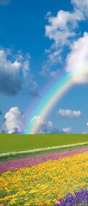 Flowers Rainbow Sky Abstract Door Mural Photo Wallpaper 018VET