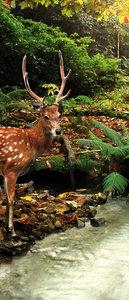 Forest Wood Landscape Trees Animals Door Mural Photo Wallpaper 147VET